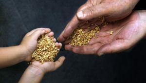 Edirne, yerli tohum merkezi olacak