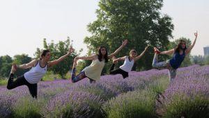 Lavanta tarlasında yoga