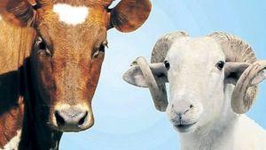 Canlı hayvan nakliyecisi ve satıcılarının dikkatine