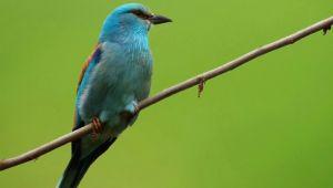 Trakya'daki kuşlar kayıt altında