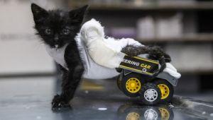 Negro'ya oyuncak kamyondan yürüteç