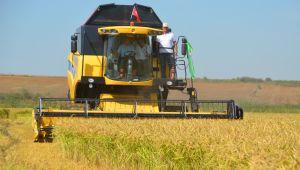 Buğday kalitesini Edirne belirliyor