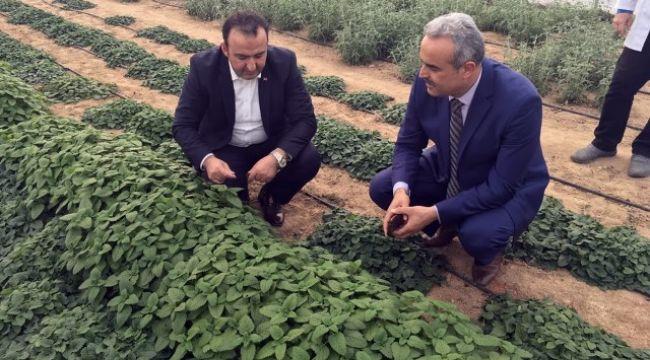Cezaevinde tıbbi bitki yetiştirilecek