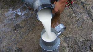 'Sokak sütü daha sağlıklı'