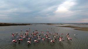 Flamingolar kışı Gala'da geçirecek