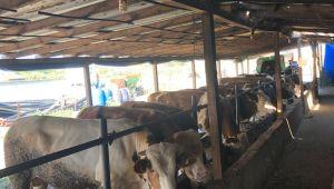 'Hayvancılık cazip hale gelmeli'