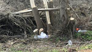 Kestiği ağacın altında kalarak yaşamını yitirdi