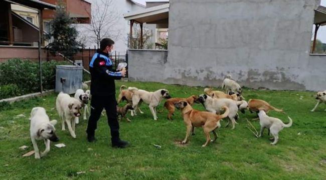 Enez'de sokak hayvanları unutulmadı