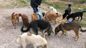 Süloğlu'nda sokak hayvanları belediye tarafından besleniyor