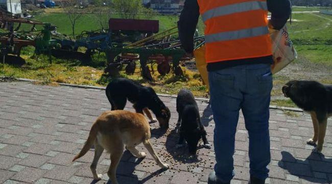 Lalapaşa'da sokak hayvanları belediye tarafından besleniyor