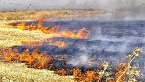Anız yangınlarının zararları büyük