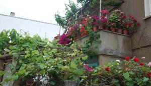 Evinin önünü botanik bahçesine çevirdi
