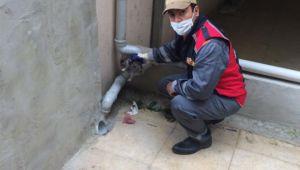 İtfaiye, su oluğuna sıkışan kedi yavrusunu kurtardı