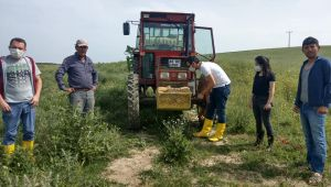 Kanola tarlalarına böcek kontrolü