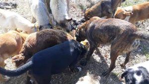 Süloğlu'nda sokak hayvanları unutulmadı