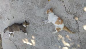 Köpek ve kedilerin zehirlendiği iddiası