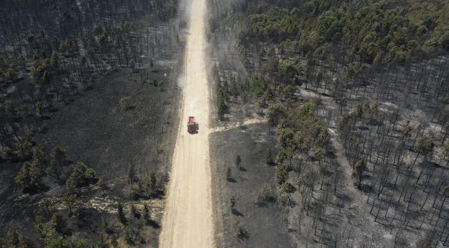 Edirne'deki orman yangını kontrol altına alındı