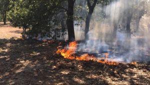 Kırklareli'nde ağaçlık alanda yangın