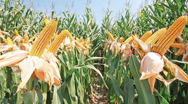 'Kuraklık çiftçiyi korkutuyor'