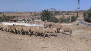 'Uzun vadeli tarım politikası şart'