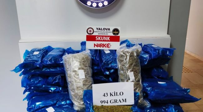 Kapıkule operasyonunda 44 kg skunk yakalandı