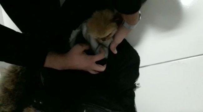 İlaçla uyuttuğu yavru köpekleri kabanının astarına gizledi