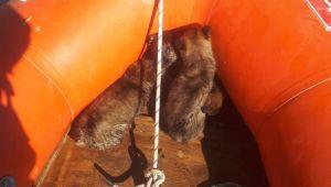 Mahsur kalan sokak hayvanlarını AFAD ekipleri kurtardı