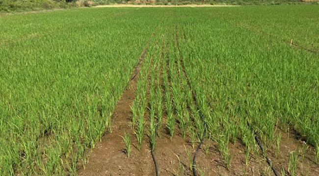 Enez'de üreticilere hibe ve tohum desteği