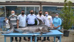 Saros Körfezi'nde yaklaşık 3 metre boyunda kılıç balığı yakalandı