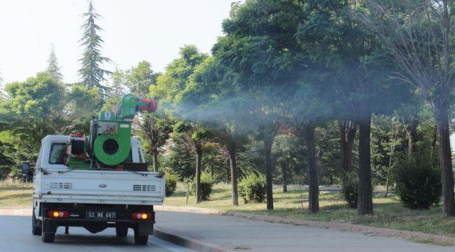 Dantel böceği artışı, iklim değişikliğine bağlı