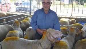 Kurbanlıklar canlı hayvan pazarı'nda satışa çıktı