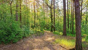 Tedbir amaçlı ormanlık alanlara giriş yasaklandı