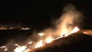 Anız yangının sıçradığı ayçiçeği tarlaları zarar gördü