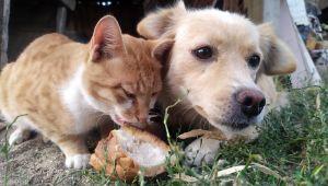 Kedi ve köpeğin dostluğu görenleri şaşırtıyor