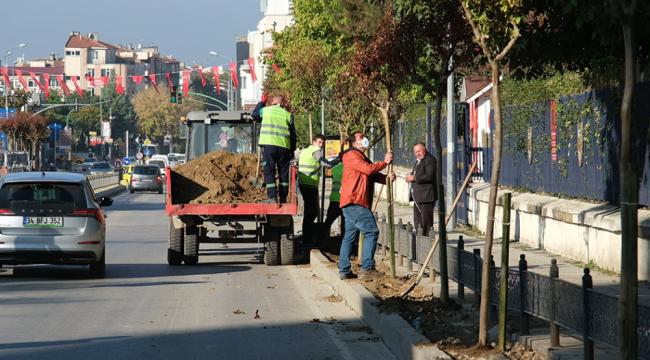 Talatpaşa asfaltına süs oya ağacı